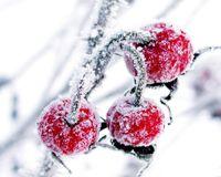 besoin vitamines en hiver